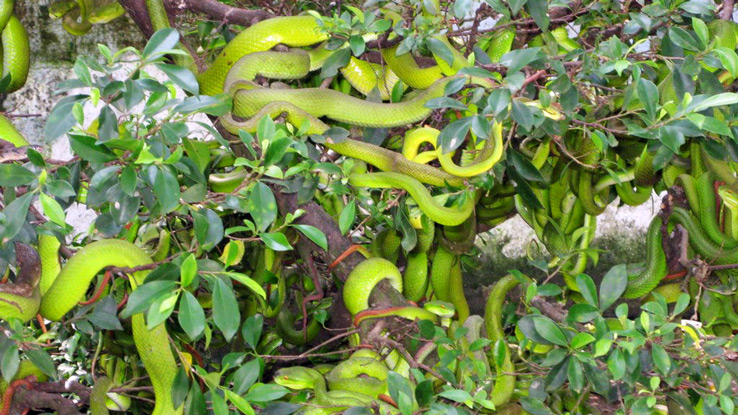 far-east-vacation-dong-tam-snake-farm